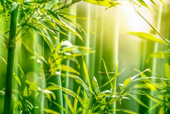 bamboo_head.jpg