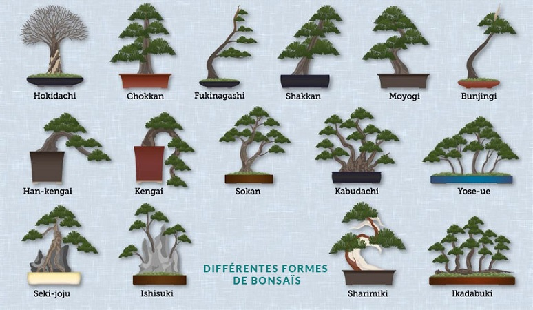 bonsai_formes.jpg
