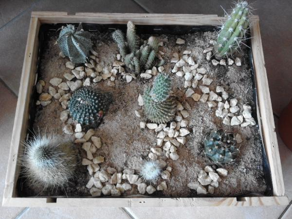 les plantes d 39 int rieur les cactus les succulentes. Black Bedroom Furniture Sets. Home Design Ideas