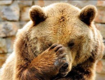 ours qui pleure.JPG