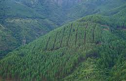 investissement-forestier-1.jpg