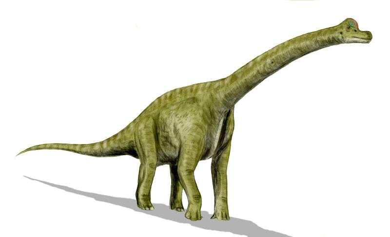 5811f7fa64_81078_brachiosauruswikicc.jpg