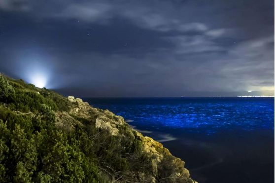 plancton lumineux.JPG