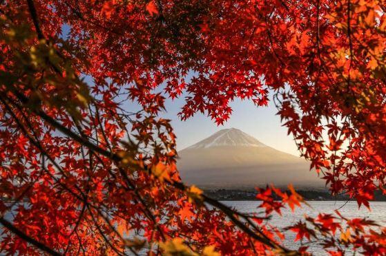 japon automne.JPG