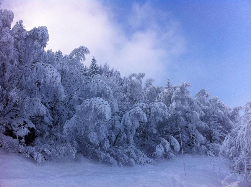 arbres-givre.jpg