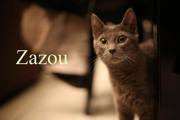 Zazou2.jpg