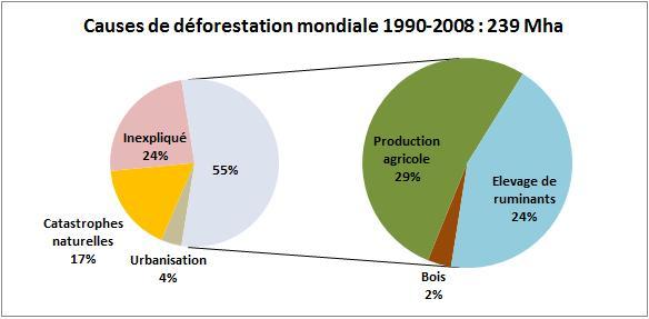 deforestaiton mondiale.jpg