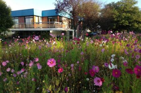 jachere-fleurie-couleur-jardin-angers-08.jpg