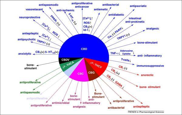 cannabinoids.jpg