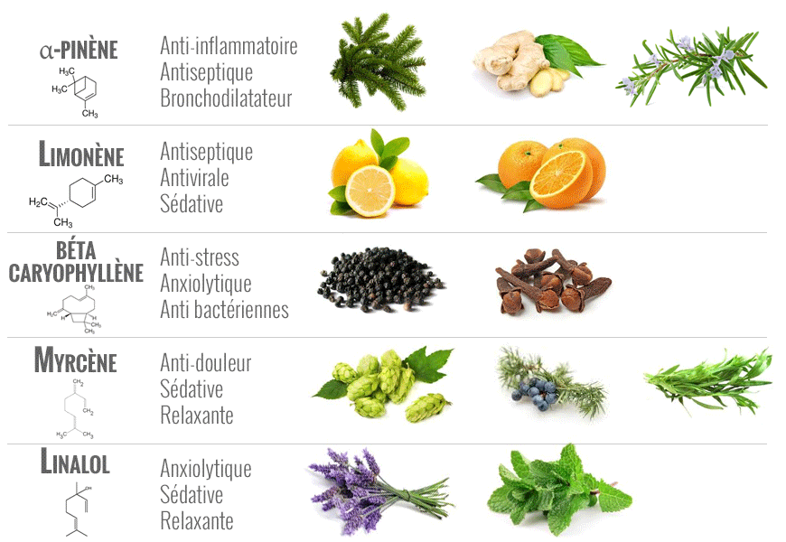 terpenes-eclairage-horticole-led.png