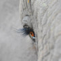oeil_elephant90x90.png