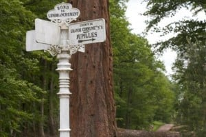 Réduction impôt forestier 300x200