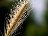 Définition de corn laws